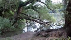 A broken tree over the marsh