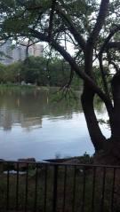 The Tidal Marsh
